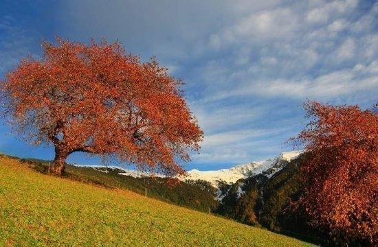 nussbaumerhof-bressanone-val-isarco-alto-adige