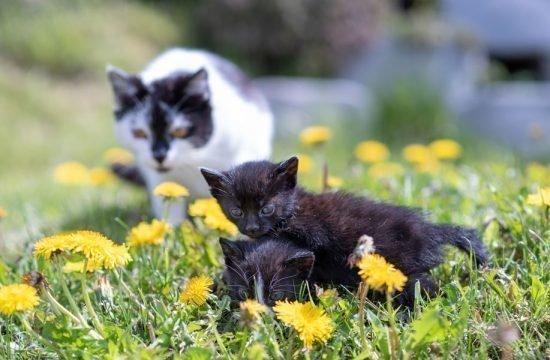 animals-on-the-farm-eisacktal-bressanone-alto-adige-(2)
