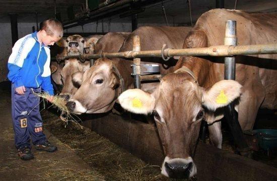 animals-on-the-farm-eisacktal-bressanone-alto-adige (3)