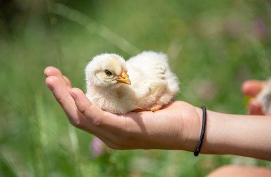 animals-on-the-farm-eisacktal-bressanone-alto-adige-(4)